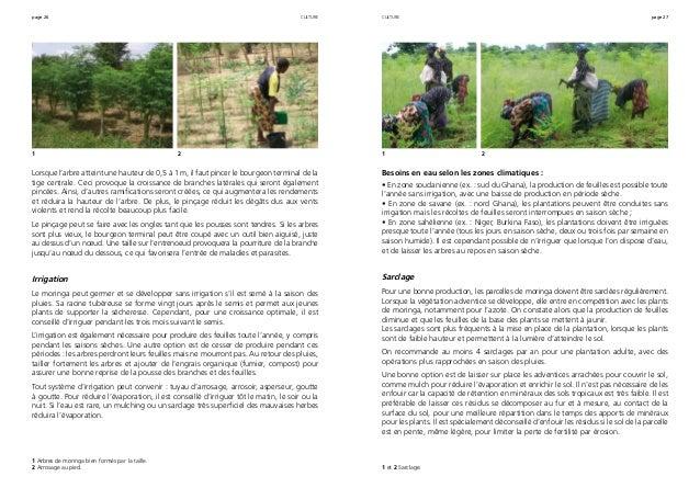 page 26 page 27 Lorsque l'arbre atteint une hauteur de 0,5 à 1 m, il faut pincer le bourgeon terminal de la tige centrale....