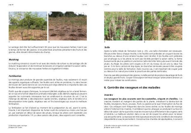 page 28 page 29 Le sarclage doit être fait suffisamment tôt pour que les mauvaises herbes n'aient pas le temps de former d...