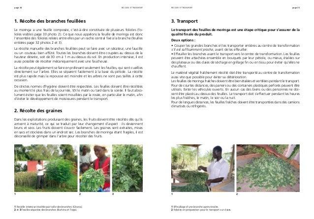 page 34 page 35 1. Récolte des branches feuillées Le moringa a une feuille composée, c'est-à-dire constituée de plusieurs ...