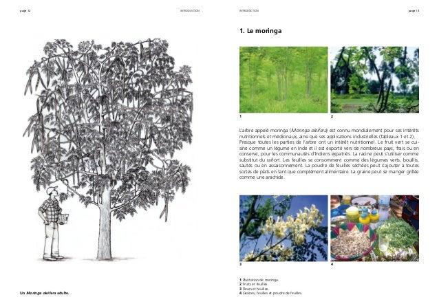 page 12 page 13introduction Un Moringa oleifera adulte. 1. Le moringa L'arbre appelé moringa (Moringa oleifera) est connu ...