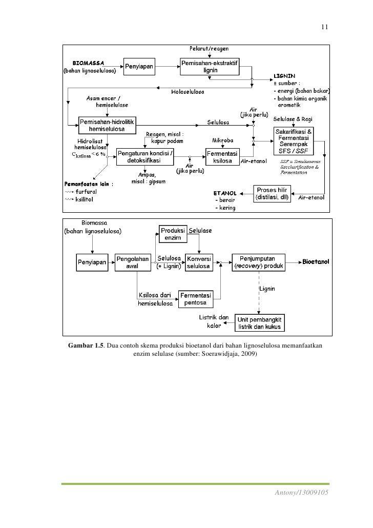 Produksi enzim selulase antony13009105 16 ccuart Images