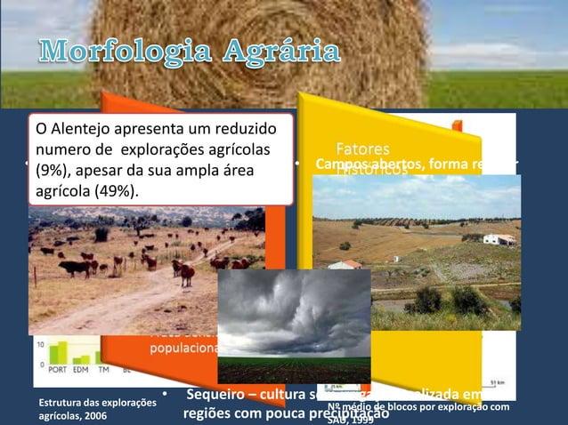 O Alentejo Alentejo, encontramos:   Assim, no apresenta um reduzido  numero de explorações agrícolas• (9%), apesar da gran...