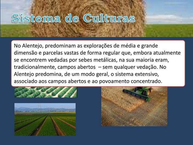 • MonoculturalNo Alentejo, predominam as explorações de média e grande                                  • Sistema extensiv...