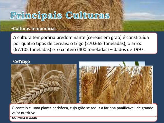 •Culturas temporáriasA cultura temporária predominante (cereais em grão) é constituídapor quatro tipos de cereais: o trigo...