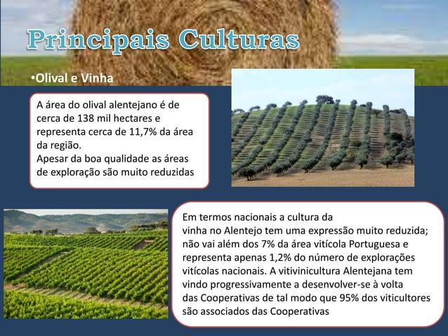 •Olival e Vinha A área do olival alentejano é de cerca de 138 mil hectares e representa cerca de 11,7% da área da região. ...
