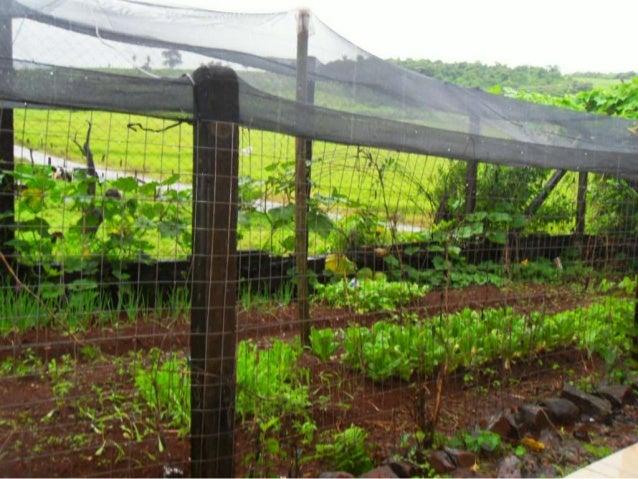 Produção da horta