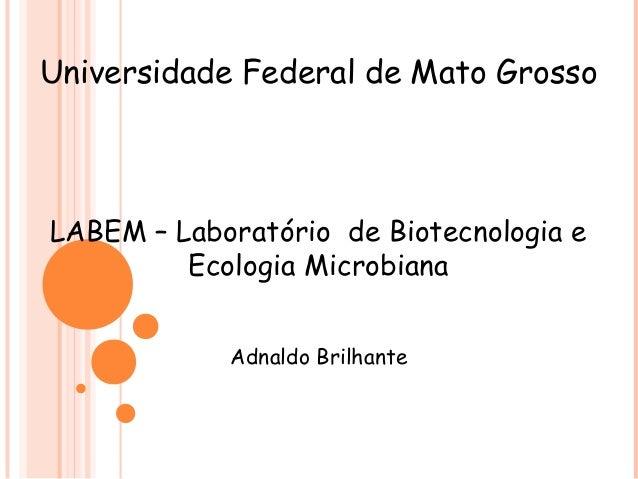 Universidade Federal de Mato Grosso LABEM – Laboratório de Biotecnologia e Ecologia Microbiana Adnaldo Brilhante