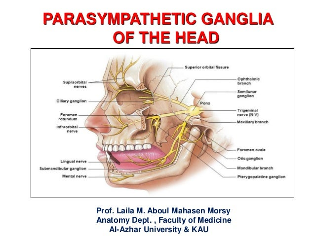 PARASYMPATHETIC GANGLIA OF THE HEAD Prof. Laila M. Aboul Mahasen Morsy Anatomy Dept. , Faculty of Medicine Al-Azhar Univer...