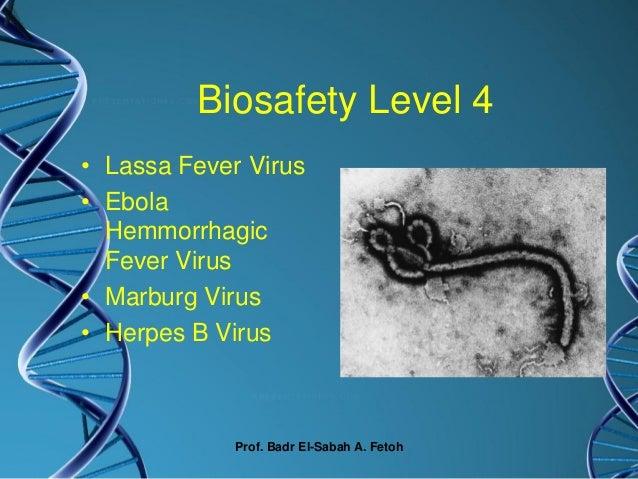 Prof Dr Badr Elsabah Biosafety In Biotech