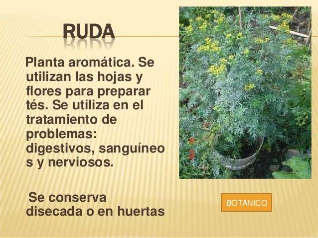 Plantas medicinales del putumayo for Para q sirven las plantas ornamentales