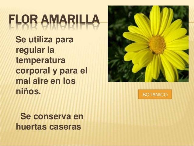 Plantas Medicinales Del Putumayo