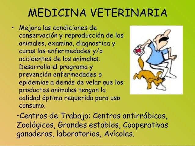 MEDICINA VETERINARIA • Mejora las condiciones de conservación y reproducción de los animales, examina, diagnostica y curas...