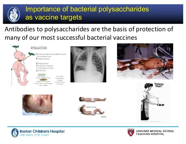 Prof Rick Malley @ Meningitis & Septicaemia in Children & Adults 2017 Slide 3