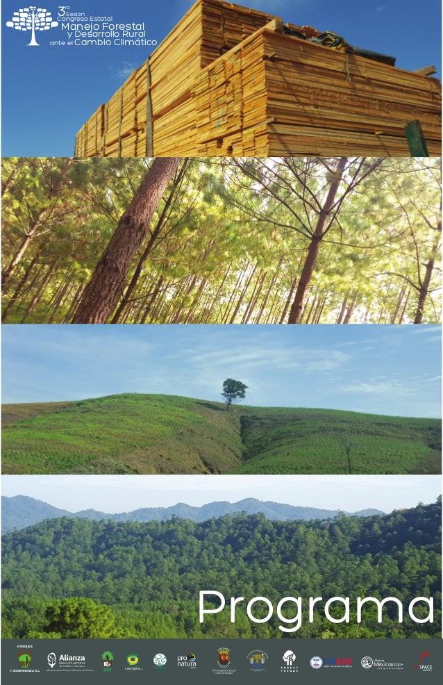 cecropia.org Mesoamericana de Pueblos y Bosques Mesoamerican Alliance of People and Forests Alianza MéxicoREDD+ Con la gen...