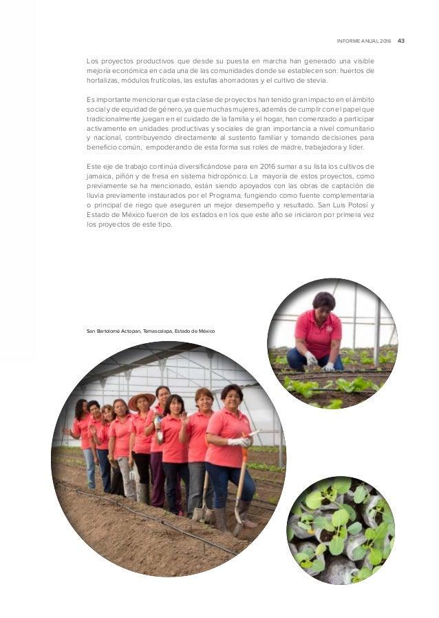 Programa nacional de reforestaci n y cosecha de agua 2016 for Importancia economica ecologica y ambiental de los viveros forestales