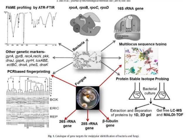 Introduction to Modern Biosystemaics for Fungal Classification
