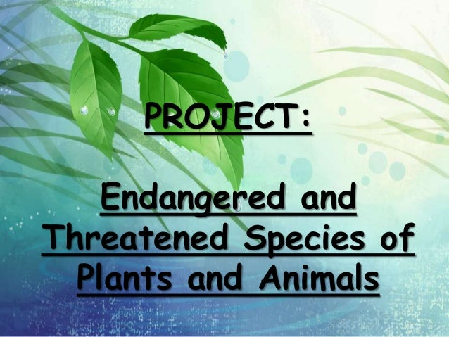 extinction of flora and fauna Most rare and precious african fauna and flora species are on the verge of extinction, today more than in the past years following increased illegal trade in the past decade as global demand for these increases on daily basis.