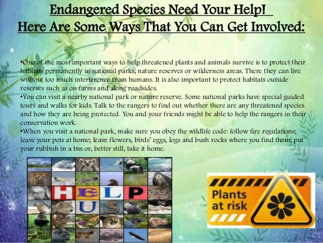 ways to help endangered species essay Why are endangered species so important isn't letting weak species die out part of natural selection while many could not imagine a world without panda bears there are much more important reasons for preserving species learn more about this topic of debate here.