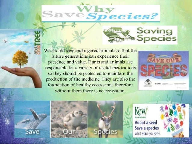 save ecosystem essay To help save the environment  you can help save the environment by helping to save honey bees and other insects which i was preparing for an essay.