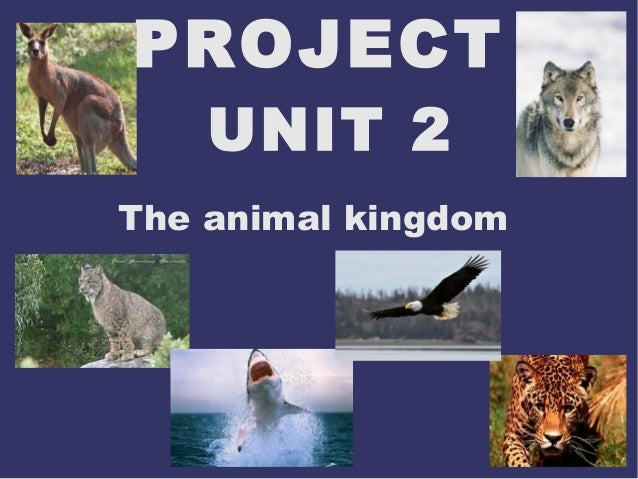 PROJECT UNIT 2  The animal kingdom