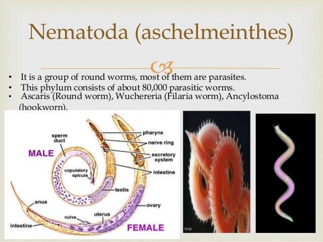 Image of: Characteristics 14 Slideshare Diversity In Living Organisms animalia