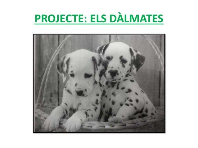 PROJECTE: ELS DÀLMATES