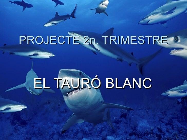 PROJECTE 2n. TRIMESTRE  EL TAURÓ BLANC