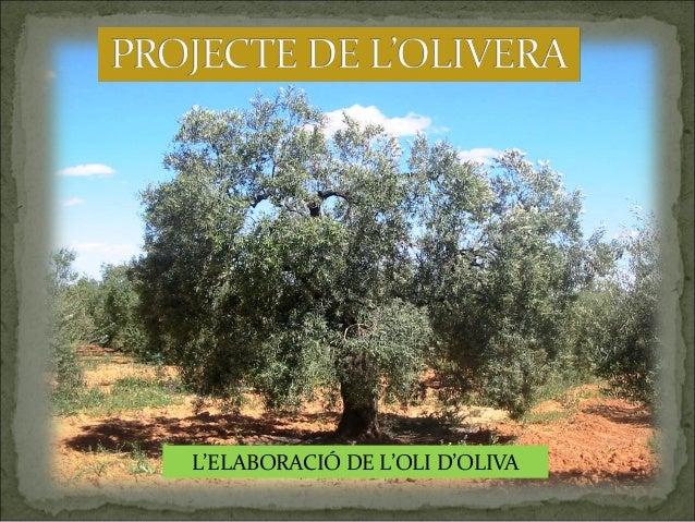 L'ELABORACIÓ DE L'OLI D'OLIVA