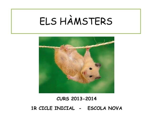 ELS HÀMSTERS CURS 2013-2014 1R CICLE INICIAL - ESCOLA NOVA