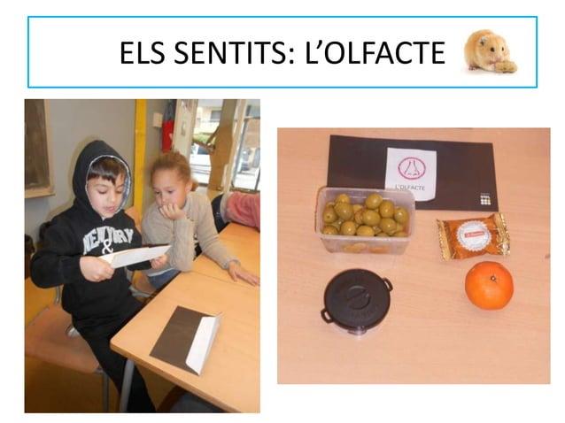ELS SENTITS: L'OLFACTE
