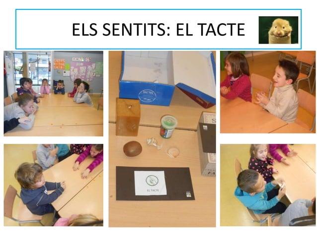 ELS SENTITS: EL TACTE