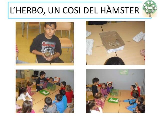 L'HERBO, UN COSI DEL HÀMSTER