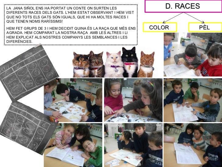 LA JANA SIÑOL ENS HA PORTAT UN CONTE ON SURTEN LES                  D. RACESDIFERENTS RACES DELS GATS. L'HEM ESTAT OBSERVA...