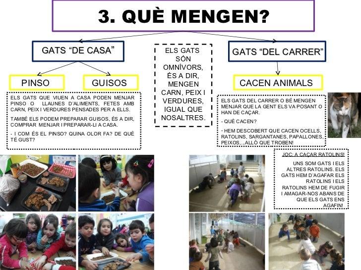"""3. QUÈ MENGEN?          GATS """"DE CASA""""                       ELS GATS        GATS """"DEL CARRER""""                            ..."""