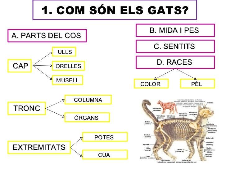 1. COM SÓN ELS GATS?                                B. MIDA I PESA. PARTS DEL COS                                 C. SENTI...