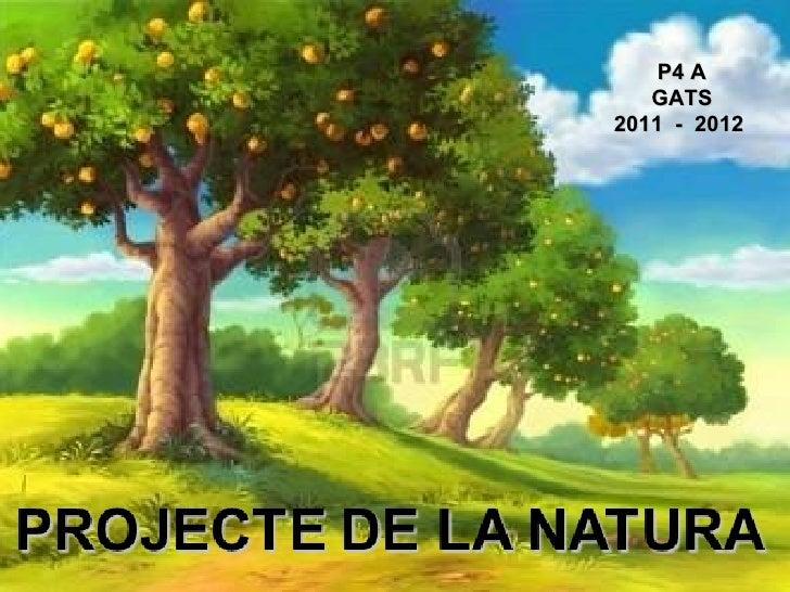 P4 A   GATS2011 - 2012