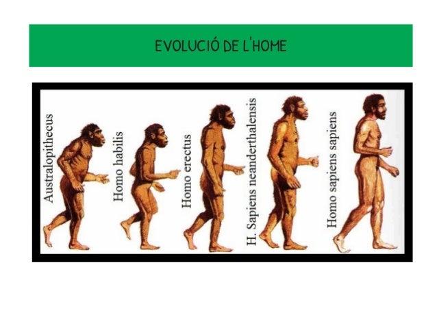 EVOLUCIÓ DE L'HOME