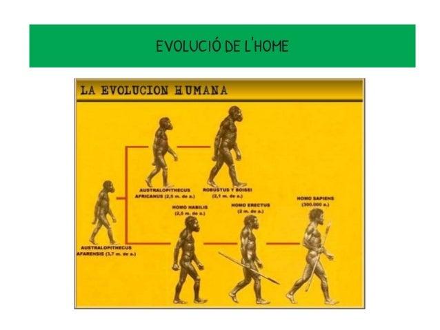 LES DIFERENTS FASES DE LA 1. EDAT DE PEDRA: -Paleolític -Mesolític -Neolític 2.EDAT DELS METALLS: -Edat del coure -Edat de...