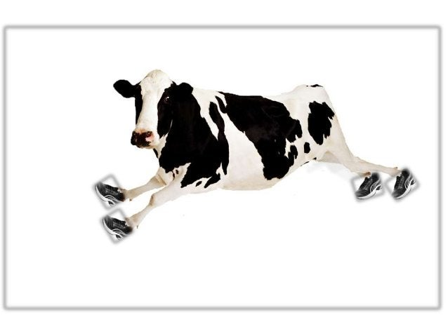 """Tag line  """"Healthy cow Healthy Milk""""Concentrating root…………"""