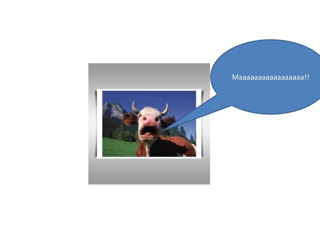 Healthy cows scream!!!!!Maaaaaaaaaaaaaaaaa   ???