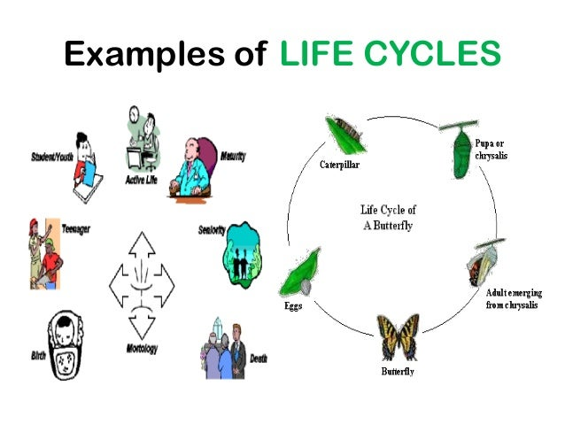 managing life cycle influences essay It project management is the process of managing the project these five process groups comprise the project management life cycle and are universal to all.