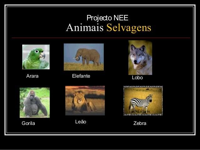 Projecto NEE  Animais Selvagens  Arara  Gorila  Elefante  Leão  Lobo  Zebra