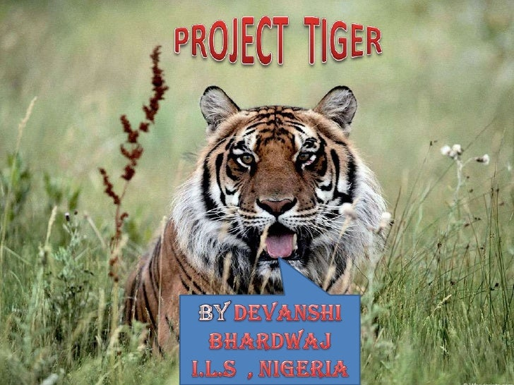 PROJECT TIGER• Project Tiger was launched in 1973 inIndia.• The Project aims at ensuring a viable  population of tigers in...