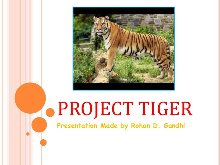 essay on save tiger project Short essay on – save tigers - 132837 1 log in join now 1 log in project tiger a wildlife conservation project was launched in india in 1972 to protect the.