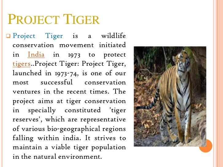 project tiger project tigerpresentation made by rohan d gandhi 2 project tiger project tiger is a wildlife conservation