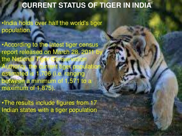 project tiger in india essay This is simple tiger project for school students  tiger-project for high school students  the first ever all india tiger census was conducted in 1972 which.