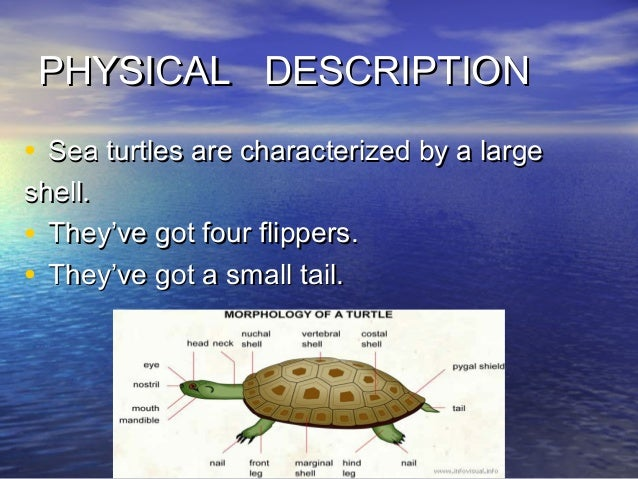 a project on the turtless prefered types of fish to eat Knowledge a project on the turtless prefered types of fish to eat has been power as.