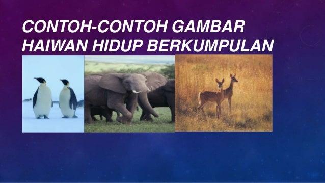 Projek Sekolah Interaksi Antara Haiwan