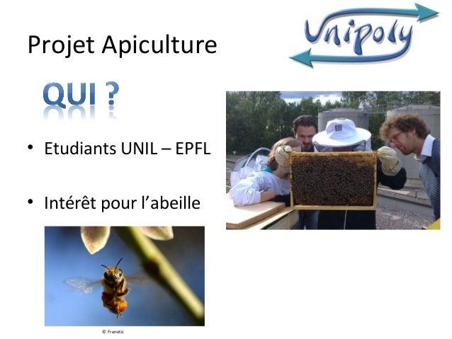 Projet Apiculture• Etudiants UNIL – EPFL• Intérêt pour l'abeille          © Frenetic