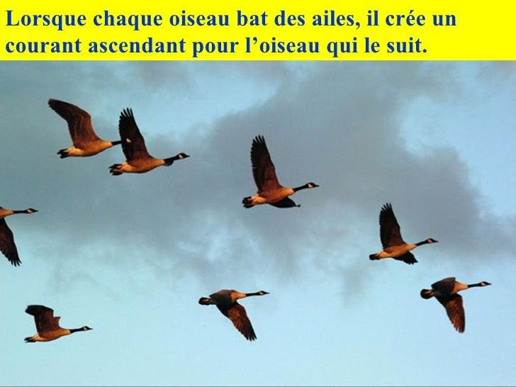 Lorsque chaque oiseau bat des ailes, il crée un courant ascendant pour l'oiseau qui le suit.